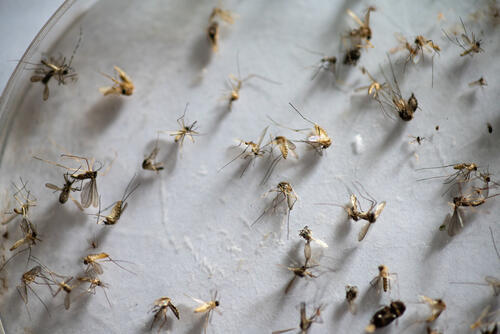 Catching Mosquitoes to Fight Malaria