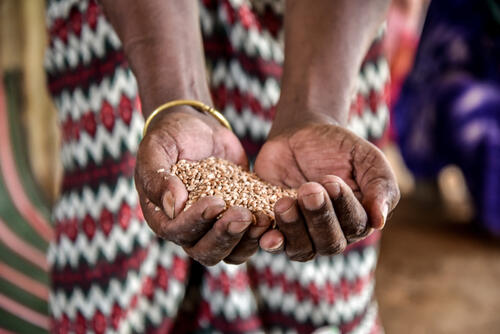 Refugee holding a handful of pulses given by WFP as part of food rations
