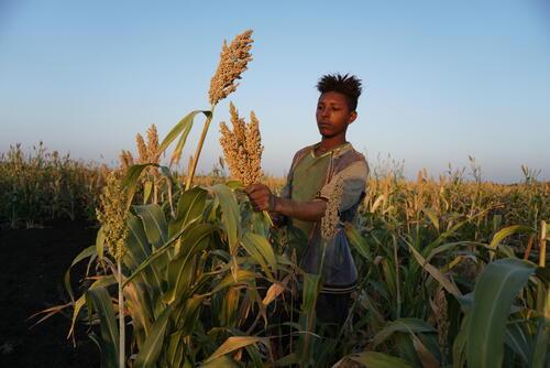 Snakebite MSF Project - Abdurafi, Ethiopia