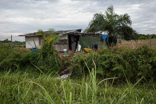 Rohingya in Malaysia: Farm Context