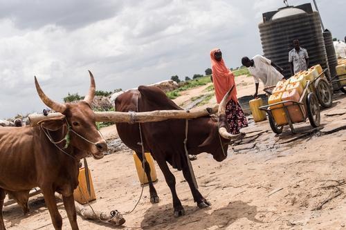IDP Camp Kukerita Yobe State Nigeria