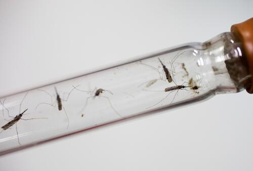 MSF Malaria Project in Cambodia
